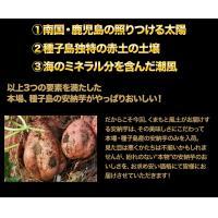 長期熟成 小玉限定 本場種子島産 訳あり 安納芋 1.2kg 小玉 2S〜3Sサイズ限定 送料無料 さつまいも  3-7営業日以内に出荷予定(土日祝日除く)|kumamotofood|15