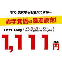 訳あり大粒 みかん 1.5kg 送料無料 2セットで1セット分、3セットで3セット分増量 青島系 みかん 複数セットは1箱におまとめ 2月上旬-2月末頃より順次出荷|kumamotofood|06