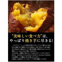 送料無料 熊本県産シルクスイート1kg さつまいも (サイズ不揃い) 2セットで1セット分増量 ※複数はおまとめ配送 5月末-6月中旬頃より出荷|kumamotofood|11
