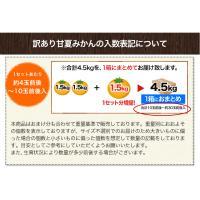 送料無料 甘夏みかん1.5kg 甘夏の名産地熊本県産 自家用訳あり 3セット購入で3セット増量 複数セットの場合1箱にまとめて配送 6月上旬-6月下旬頃より出荷|kumamotofood|11