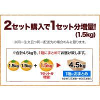 送料無料 訳ありはっさく柑(八朔・紅八朔)1.5kg 熊本県産 八朔みかん 3セット購入ならW増量※おまとめ配送 5月中旬-6月上旬頃より順次出荷|kumamotofood|10