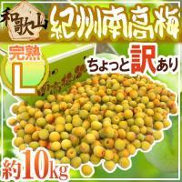 【送料無料】日本一のブランド梅産地・紀州和歌山の《南高梅》種が小さく肉厚で柔らかい!甘い香りがたまら...