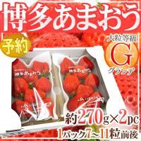 【送料無料】「おいしいいちごの代名詞」あまおうの中でも大粒♪食べごたえ抜群の「あまおうG:グランデ」...