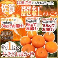 """【送料無料】""""清見オレンジ""""""""マーコット""""""""アンコール""""3種の柑橘をいいとこどりした「せとかの姉妹・..."""