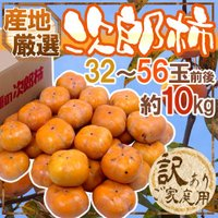 """【送料無料】富有柿と人気を二分する人気品種「次郎柿」まろやかでコク深い甘さと""""歯で食べる""""と称される..."""