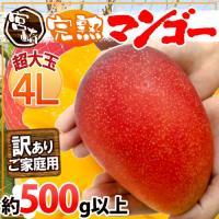"""最高級フルーツ""""宮崎完熟マンゴー""""が訳ありでお買い得!4Lサイズの超特大が驚きの超特価!!この機会に..."""
