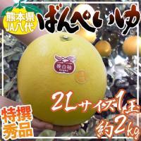 ドでかい!世界最大級の柑橘「晩白柚」爽やかな柑橘の香が広がり、果肉は上品な甘さでプリプリプチプチ!厚...