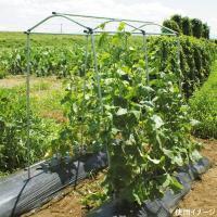 キュウリ、小型カボチャ、小玉スイカ、ゴーヤ、エンドウなどのつる野菜の栽培が省スペースで行え、空中栽培...