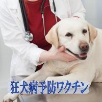 足利市、佐野市、太田市、館林市にお住まいの方限定で、往診による「狂犬病予防ワクチン」の接種がお申し込...