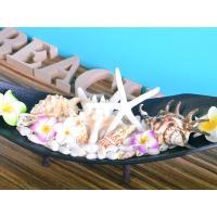 貝殻 スターフィッシュ ビーチデコレーション インテリアトレー1  ハワイアン雑貨 インテリア雑貨 天然シェル  likebeach 04