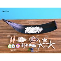 貝殻 シェル スターフィッシュ ビーチデコレーション インテリアトレー4 ハワイアン雑貨 インテリア雑貨|likebeach|06