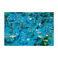 澄んだ池に泳ぐ鯉と睡蓮の葉が幻想的で美しい(岐阜)。従来インキより幅広い再現領域を持つ広演色インキ「...