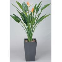 ★送料無料★ アートストレチア花付 H160cm 観葉植物 3A3201-840