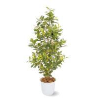 人工植物 アオキ 鉢付 1.5m 室内用
