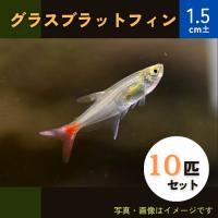 (熱帯魚・カラシン)グラスブラッドフィン SMサイズ 10匹|mame-store