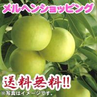 二十世紀梨 「梨之介」 2.8kg 3L(8個入り)|marchen-t