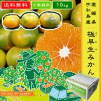 極早生みかんは9月から10月頃まで楽しめる、甘酸っぱさが特徴の温州みかんです。  収穫し始めの9月は...