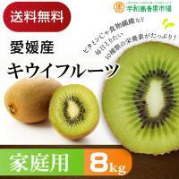 愛媛産 キウイフルーツ 8kg 家庭用 送料無料