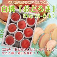 【セール】 ギフト 白桃 送料無料 山形県産 おどろき 2kg(5-8玉) モモ もも