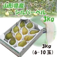 ギフト 洋梨 送料無料 山形県産 西洋梨 シルバーベル 3kg(6-10玉)