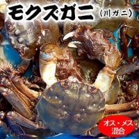 漁期は8月から12月末まで。 特に美味しくなる11月ごろからだんだんとれなくなってきます。  兵庫県...
