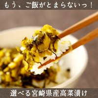 宮崎県東諸県郡都農町産。肉厚高菜を100%使用、おすず高菜。