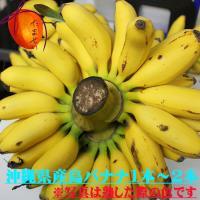 人気の島バナナ1本丸ごとの販売です。  島バナナは一般に出回っているバナナと比べるとやや小ぶり。 と...