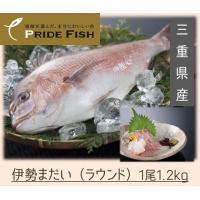 〜写真は調理例を含みます〜   伊勢まだいは三重県のブランド養殖真鯛です。与える餌の違いによる身質の...