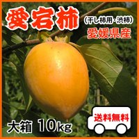 あたご柿(予約11月12日以降~)大箱10kgで送料無料・愛宕柿(干し柿用)渋柿・大箱10kg・愛媛産・ご家庭用