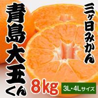 期間限定販売!  青島大玉くん(3L・4Lサイズ)食べ頃になってきました。