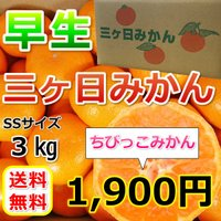 販売価格1800円にて承り中!!   小さくてかわいいちびっこみかん!! 小さい方が味が締まっていて...