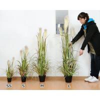ハギハラ 人工観葉植物 リードグラス #1853 (S/80cm) [人工植物 造花 観葉植物]