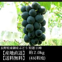 ◆9月開始の収穫次第の出荷となります◆【収穫でき次第順次発送】
