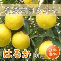 「はるか」10kgです。 日向夏から育成した品種で、レモン色をしたみかんです。 見た目は酸っぱそうな...