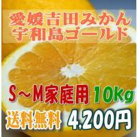 宇和島ゴールドはその外観と風味から、和製グレープフルーツとも言われます。ほど良い甘さと爽やかな酸味が...