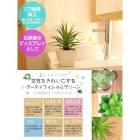 サキュレント プランツ アーティフィシャルグリーン Lサイズ 人工観葉植物 インテリアグリーン フェイクグリーン 光触媒 CT触媒