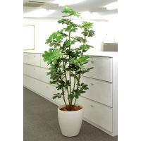 光触媒観葉植物(人工観葉植物) 光の楽園 カポック 1.8m