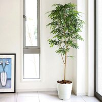 光触媒人工観葉植物 光の楽園 トネリコ1.8m、新商品