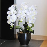 ■光触媒胡蝶蘭(光の楽園)胡蝶蘭セリースWは、お部屋のアクセントや空間に彩りを添え、空気をキレイにす...