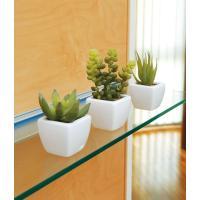 光触媒観葉植物テーブルタイプ(人工植物) 多肉植物3点セット