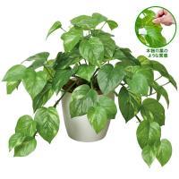 ■光触媒観葉植物テーブルタイプ フレッシュポトスは、「まるで本物の葉のようだ」と大人気の商品です。お...