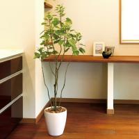 光触媒人工観葉植物 フィカスブランチツリー1.3m