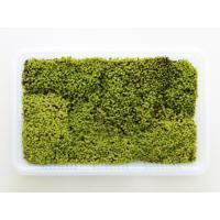 星砂のようなかわいらしい苔です。和風や洋風のミニ盆栽にどうぞ!<br> 開けた日当りのよ...