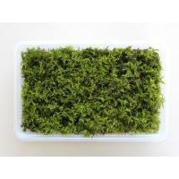 日陰で適度な湿り気があればよく育つので苔庭にも使用されています。<br> 苔玉、盆栽の下...