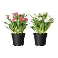 IKEA イケア FEJKA 人工観葉植物, Common daisy アソートカラー(色の希望がなければおまかせになります) (502.373.64)