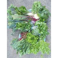 野菜セット M 12種類程(無農薬、無化学肥料、朝どり直送)