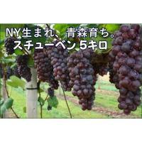 【食べ応え抜群♪黒粒のあま〜いブドウ品種≪スチューベン≫のご案内です♪】  『商品説明』  品名:ス...