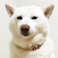 ワンコチョーカー【サクラ/細タイプ】大型犬用|nanarin-house|02