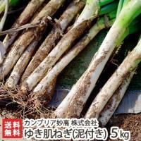 新潟県上越市のカンブリア妙高オリジナルブランド「ゆき肌ねぎ」。市販されている白ねぎとは一線を画すその...