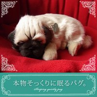 犬 ぬいぐるみ リアル|本物そっくりに眠るぬいぐるみ|パーフェクトペット|パグ